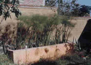 constructed wetlands for greywater treatment
